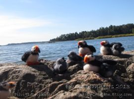 Puffin Loafing Ledge by Pilvi91
