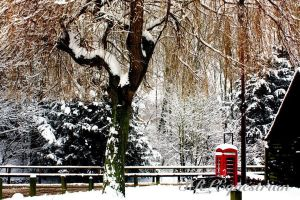 Winter Telephone Box by SRLEquestrian