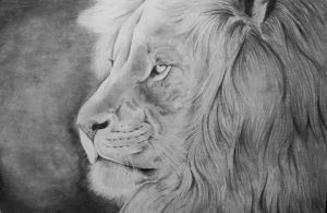Lion by Windicious