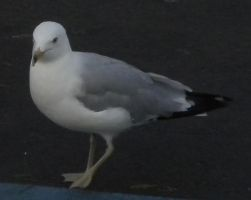Seagull 15 by EquideDesigns