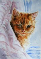 Cat's Day by danuta50