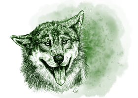Green Wolf by animalartist16