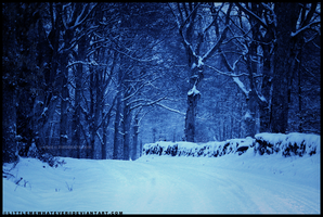 Winterland Road by littlemewhatever
