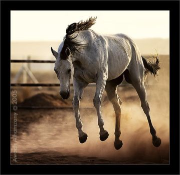 Power Horse by Awadh