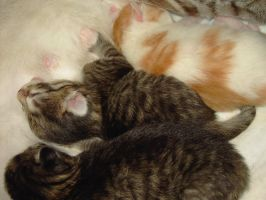 Kittens 4 days old part 1 by Soulkim