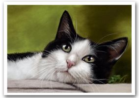 Tuxedo Cat in Garden by art-it-art
