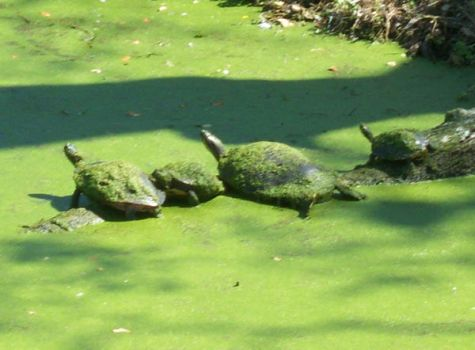 Napping Turtles by Kat-Ana