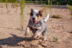 Mg 8198 by corniger-aries