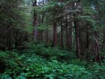 Tongass National Forest 7 by ShadowsStocks