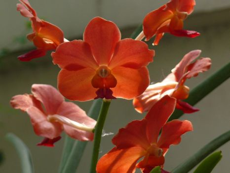 My Orchid37 by Otoff