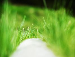 The grass on the curb. by macharovsky