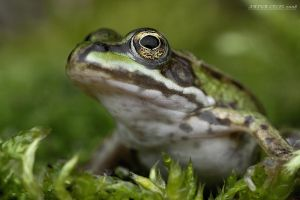 146.Frog 2 by Bullter
