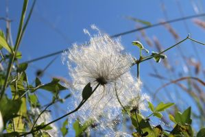 Light and Fuzzy by Flower-of-Art