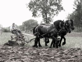 Horse  Plow by Chris01125