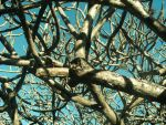 Branches of a tree by AlexStickWater