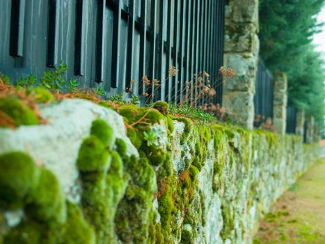 Mossy Fence by PhotoFolks