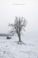 Cold Tree by Stridsberg