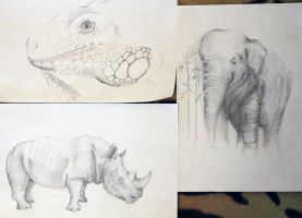 sketches of animals by TinaGrey