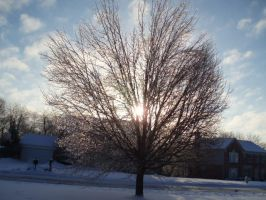 Tree in icey sunlight by Sunlandictwin