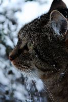 Snow in January 2009 by WhiteSpiritWolf