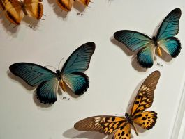 moths and butterflies stock145 by hatestock