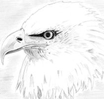 Eagle by migeamor