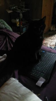 Lap Top Cat by GillyTheArtist
