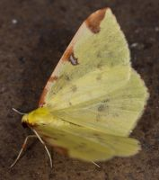 Yellow Butterfly - 3 by sheihulud