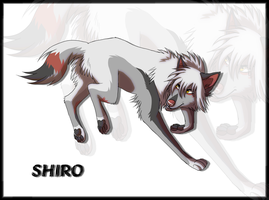 Shiro by HailDawn