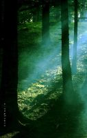 the light in the forest by nalptekin