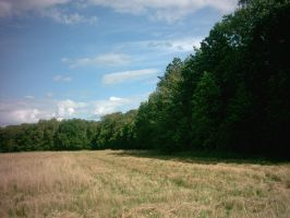 nature6 / field, wood, sky, trees by Bugl4r