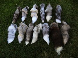 Ranched tails - need help identifying! by SPWilder