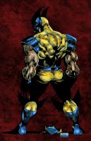 wolvie colored by toddrayner