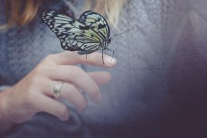 52 weeks #4 Butterfly stories by Pamba