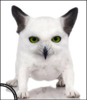 Green eyed Owg by HumanDescent