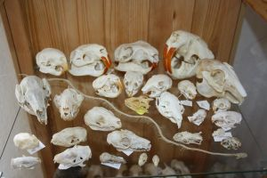 skull collection part 3 by Nimgaraf