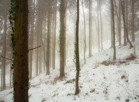 Winterforest113 by moonchild-unveiled