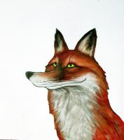 Fox by Ink-and-think