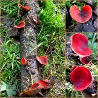 Scarlet Elf Cup by iriscup