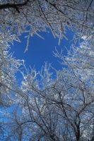 Crystal Branches by Seath