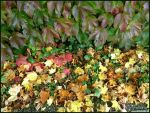 Autumn leaves 2 by Lupsiberg