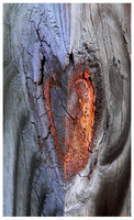 Wooden Hearted by rickster155