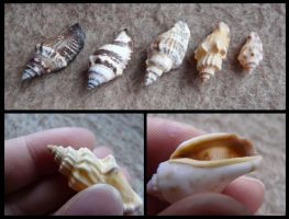 Unknown Shells #1 by CabinetCuriosities