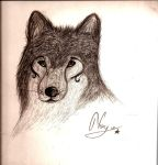 Wolf by Equinoxity