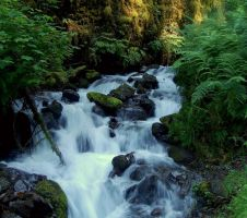 Wahkeena Springs by xsiorcanna