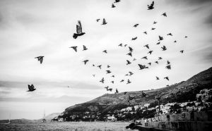 Airborne by mister-kovacs