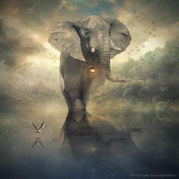 the elephant by evenliu