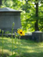 Mt. Hope Cemetery photo 1 by drywall420