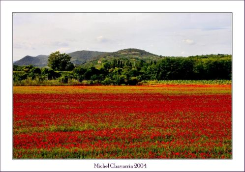 Bloody fields for ever... by Michel-Lag-Chavarria