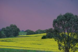 Canola Storm by Buggie1112